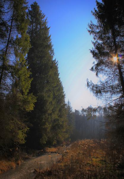 Radawa las