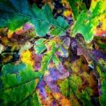 Mobilna fotografia – jesienne kolory