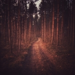 Fotografia mobilna – dark magic forest