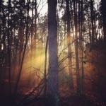 Fotografia mobilna – świetlistość | brightness