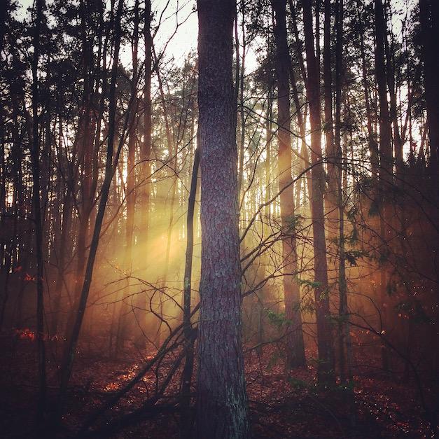słoneczny las 2