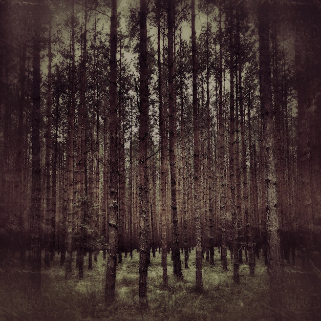 im bardziej w las