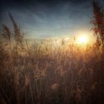 Słoneczne trzciny – stawki Babionka