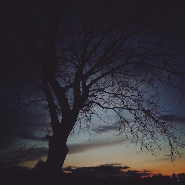 mobilna fotografia drzewo