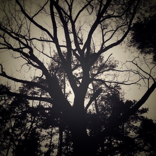 majestatyczne drzewo
