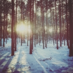 Las, Puszcza Solska