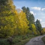 Bieszczady droga w lesie