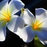 Jak wykonać bukiet kwiatów z bibuły?