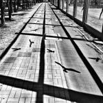 Blake – street foto, ptaki