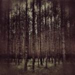 Fotografia mobilna – im bardziej w las