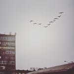 Przelatujące ptaki