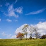 Samotne drzewa