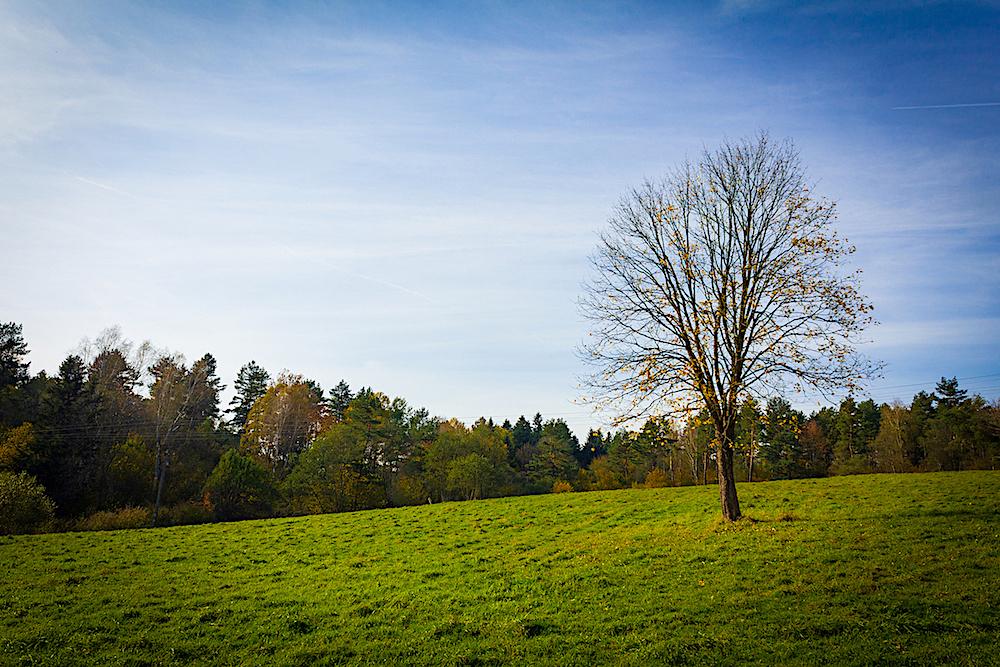 Połoninki Arłamowskie, łąka