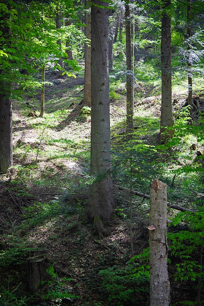 Bieszczady fotografia, Jeziorka Duszatyńskie drzewa