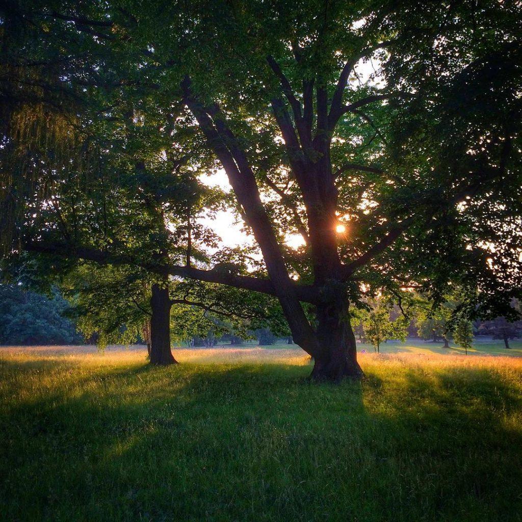 zamek Łańcut park i słońce