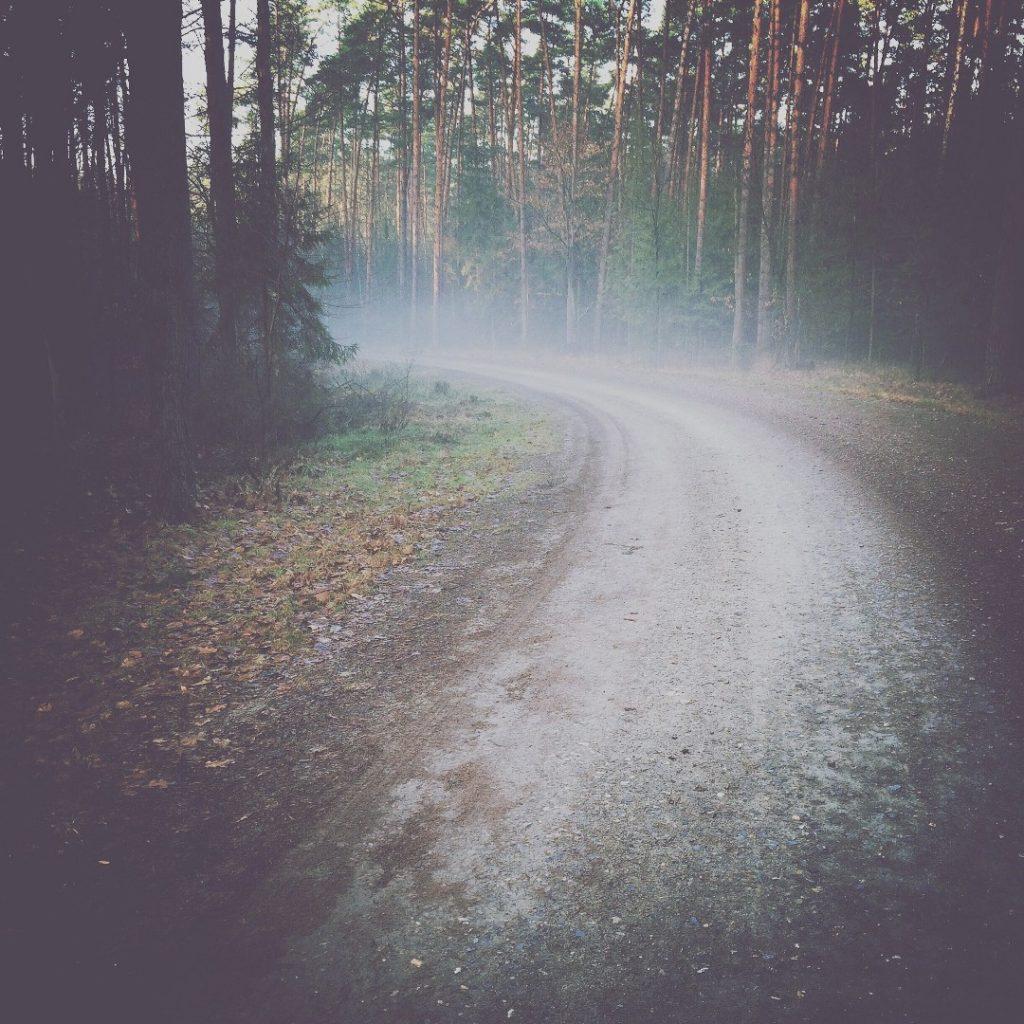Blake fotografia leśna droga