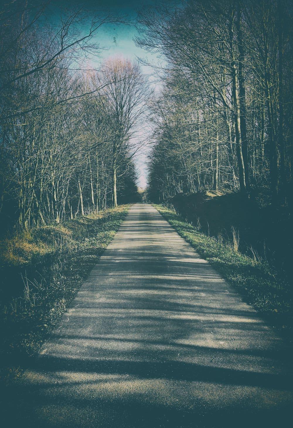 las węgierka