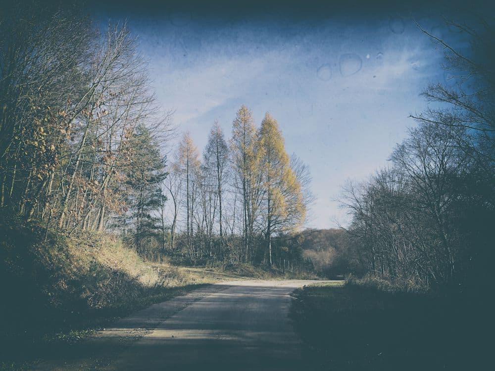 las węgierka leśna droga